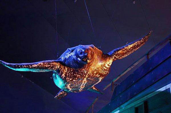 オサガメの画像 p1_37