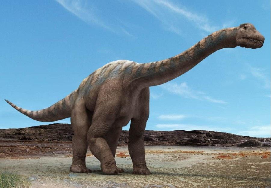 【最新】巨大草食恐竜ブラキオサウルスまとめ!生息地、大きさ、水中活動説ほか