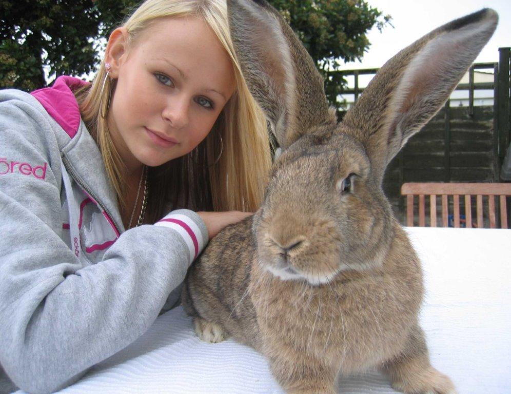 ラビット コンチネンタル ジャイアント 愛の大きさがウサギの大きさを越えた! 巨大ウサギへの愛が止まらない夫婦(イギリス)