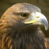 最強!世界一危険な鳥ランキングTOP10